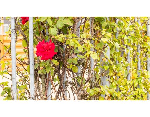 010Lijf_foto_Andy-Doornhein-2823